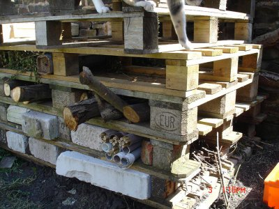 Building an invertebrate habitat